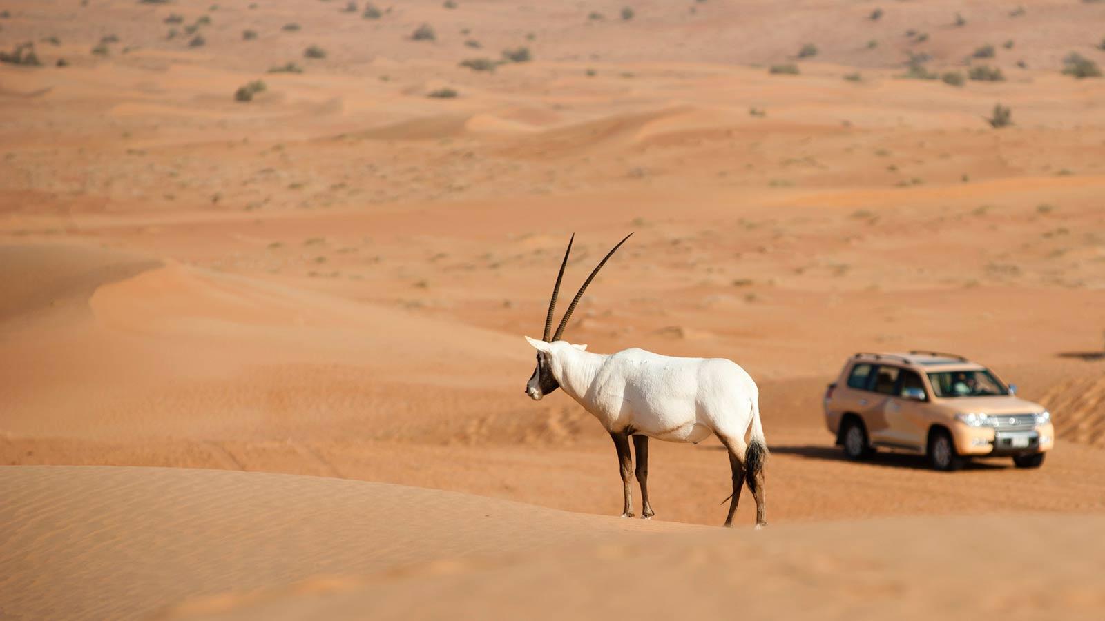 迪拜沙漠旅游攻略 棕榈岛亚特兰蒂斯