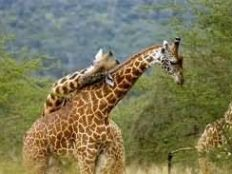 肯尼亚婚礼-蜜月旅行
