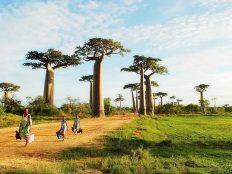 马达加斯加婚礼-蜜月旅行