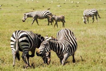 坦桑尼亚婚礼-蜜月旅行