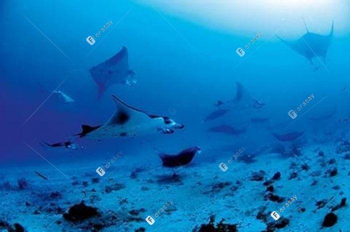塞舌尔康斯丹艾弗里亚度假酒店潜水