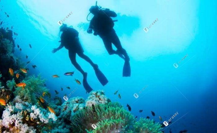 塞舌尔萨沃伊水疗度假酒店 Underwater Adventure