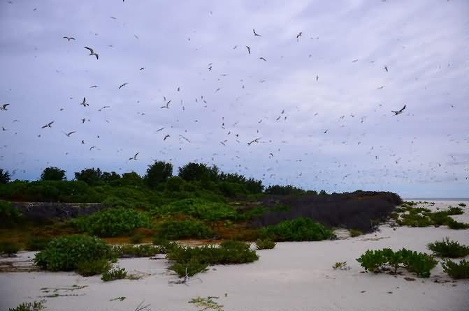 塞舌尔鸟岛