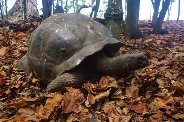 库金岛特别自然保护区