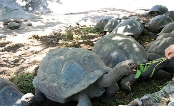 屈里厄斯岛国家海洋公园