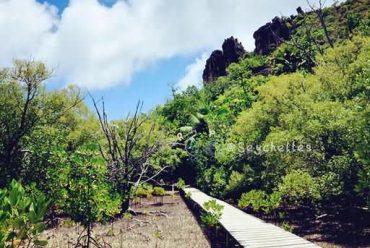 如何到达塞舌尔普拉兰岛乔治特海滩(Anse Georgette)?