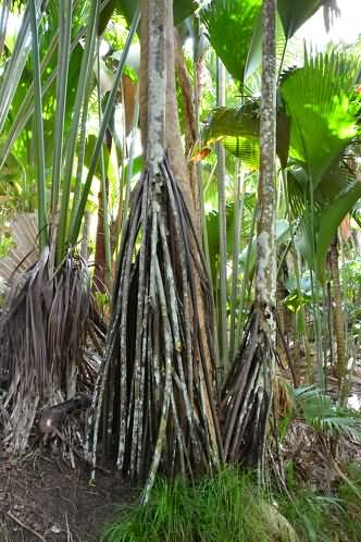 塞舌尔五月谷自然保护区